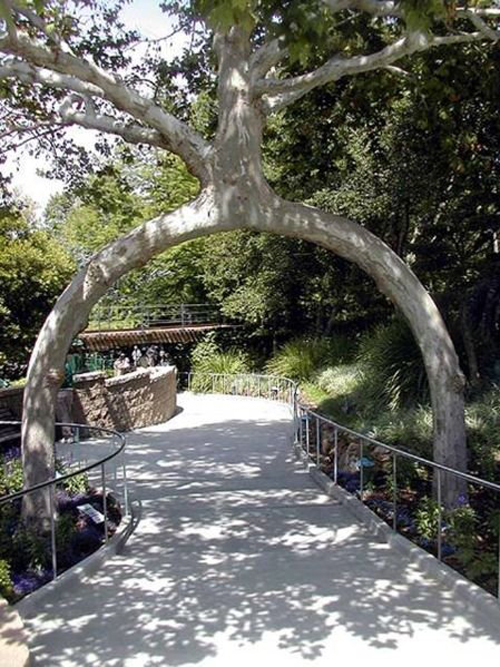 axel-erlandson-tree-sculpture-3