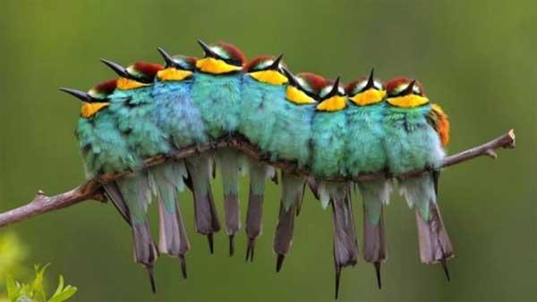 bunchofbirds