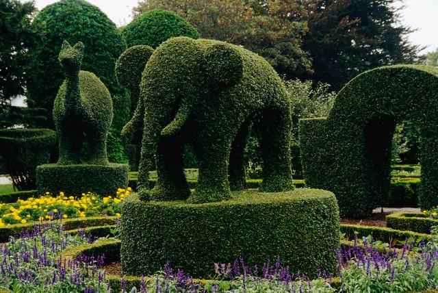 Shrubs Sculpted into Animals at Topiary Garden