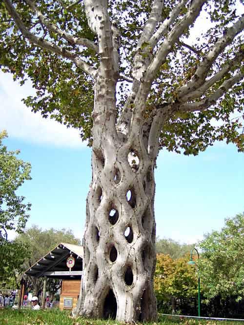 circus-tree-2