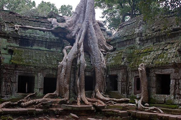 silk-cotton-tree-cambodia-7