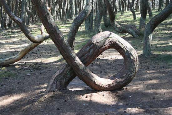 weird-dancing-forest-1