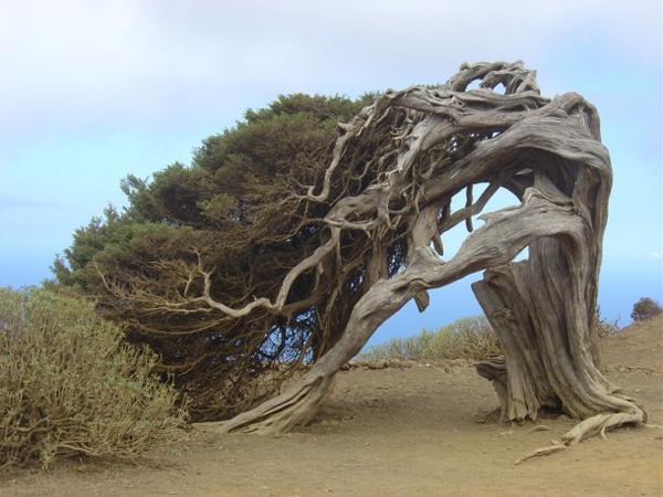 weird-tree
