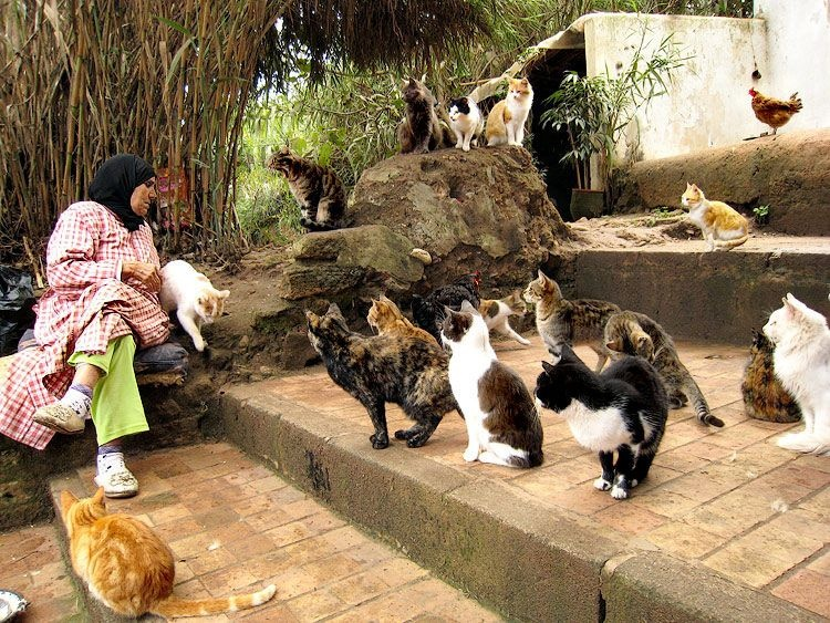 love of cats