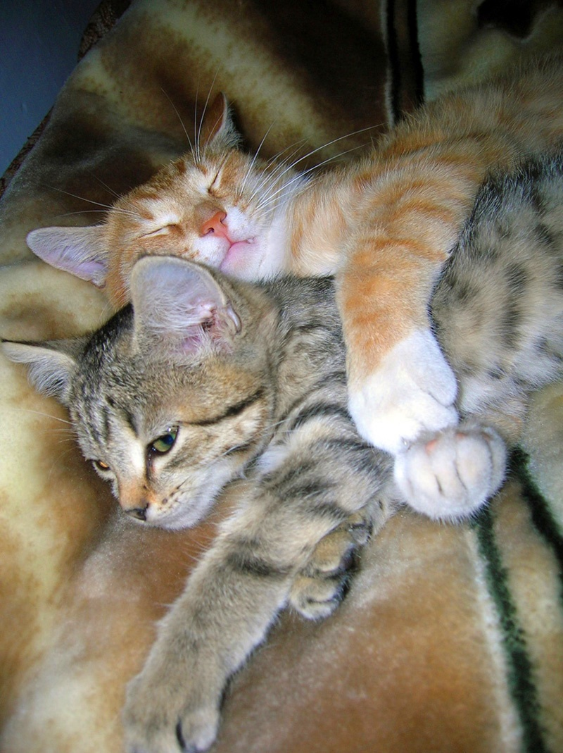 love of cats10