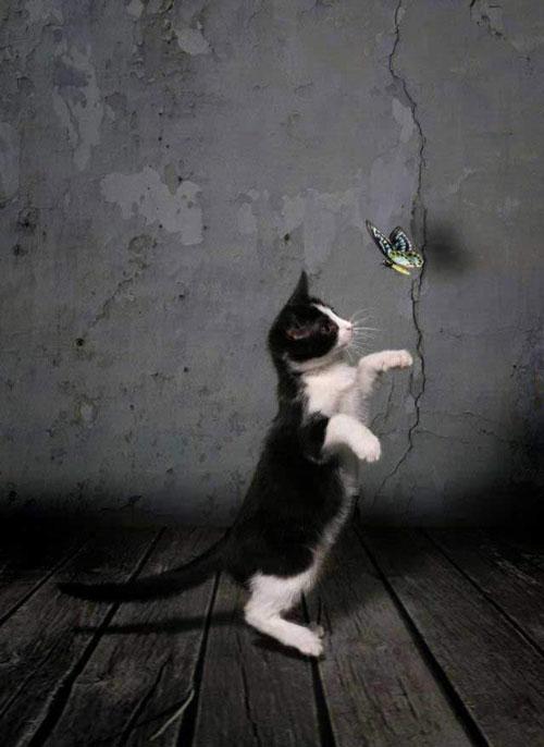 Cutest Pets & Animals