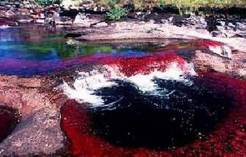 Cano-Cristales-River-in-Colombia.2