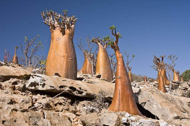 Socotra Island in Yemen2
