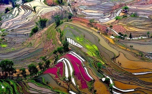 The rice terraces of Yunnan China.