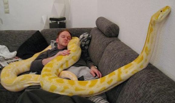 snake pet