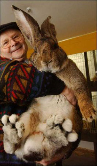 biggest-rabbitt