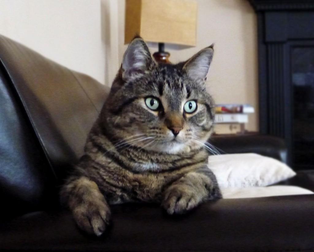 Cat_Sammy
