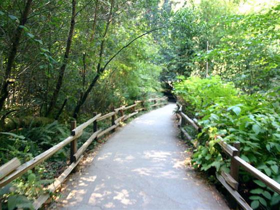 Muir_Woods_National_Monum-Muir_Woods