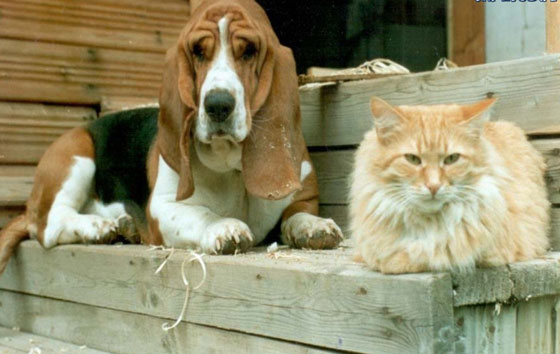 cats&dogs10