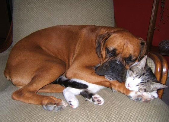 cats&dogs12