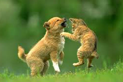 cats&dogs17