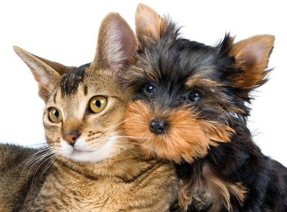 cats&dogs18