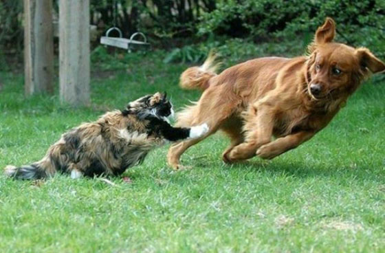 cats&dogs19