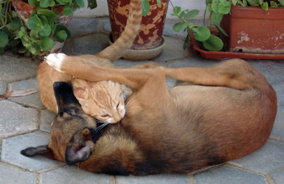 cats&dogs21