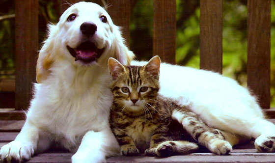 cats&dogs24