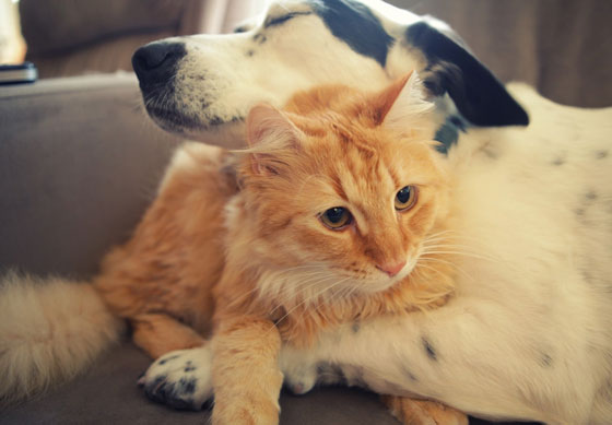cats&dogs25