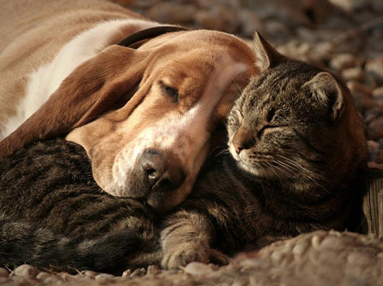 cats&dogs30