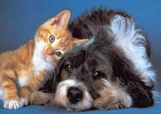 cats&dogs31