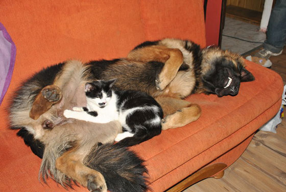cats&dogs32