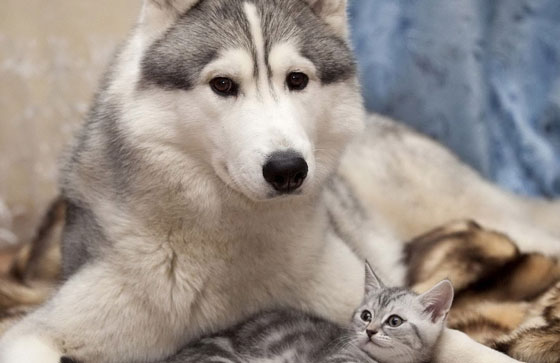 cats&dogs33