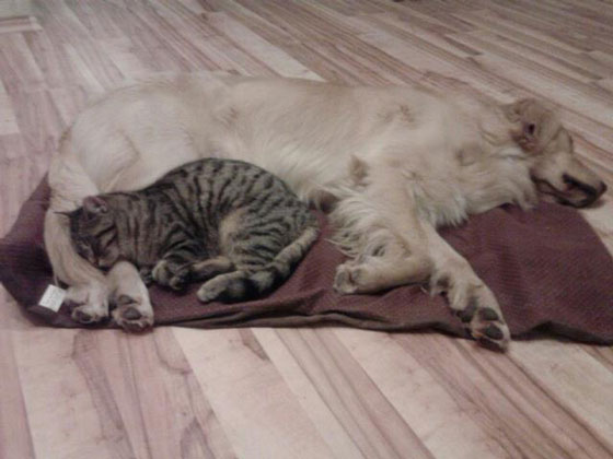 cats&dogs34