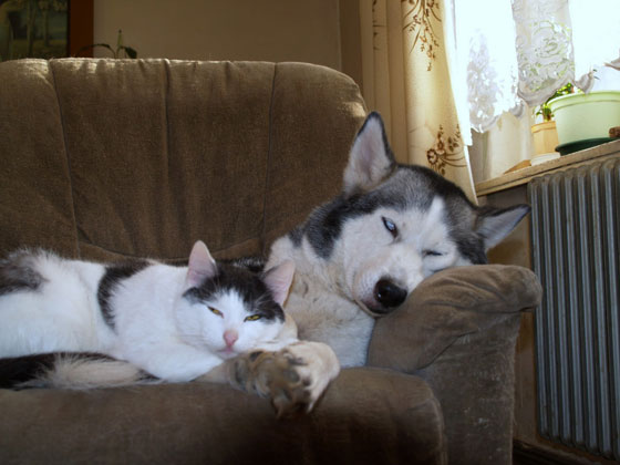 cats&dogs35