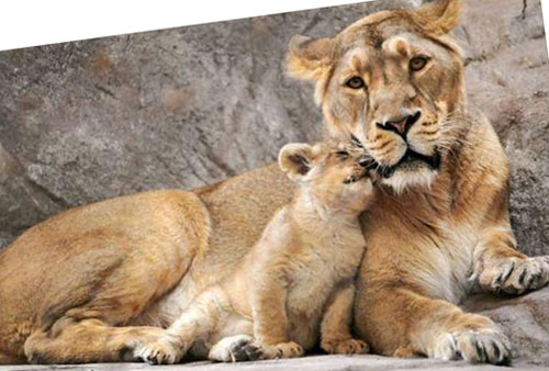 Adorable-animal-moms-and-Babies-photos-(3)