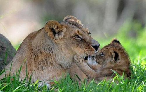 animal-baby1