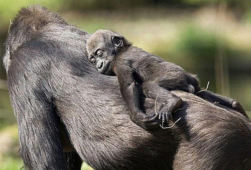 baby-animals-5