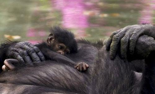 baby-animals0