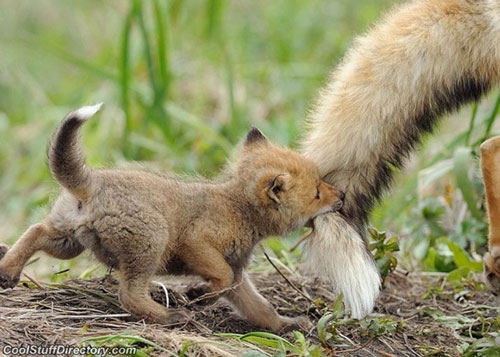 baby-animals1