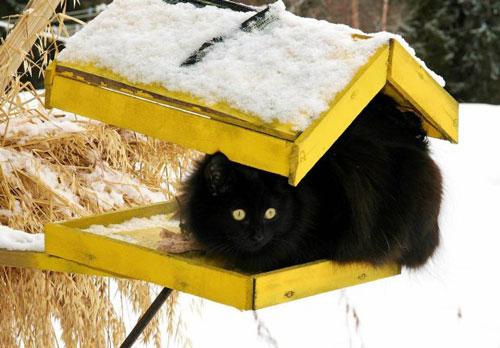 cat-hunting1