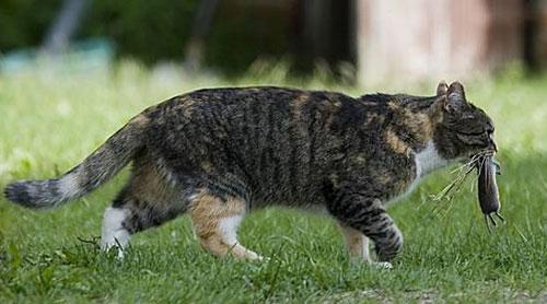 cat-hunting2