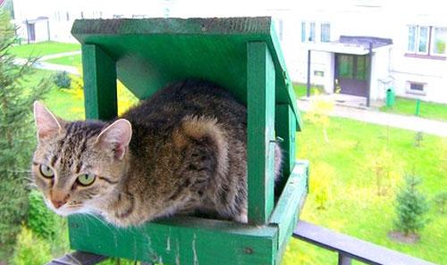 cat-in-birdfeeder