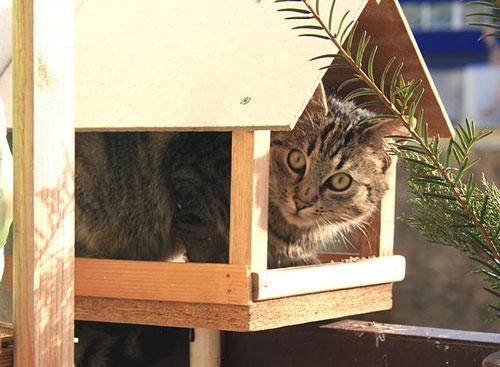 cat-in-birdfeeder5