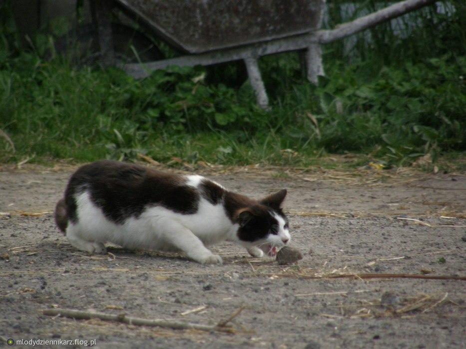 cat mouse2