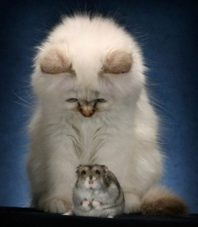 cats-and-mice