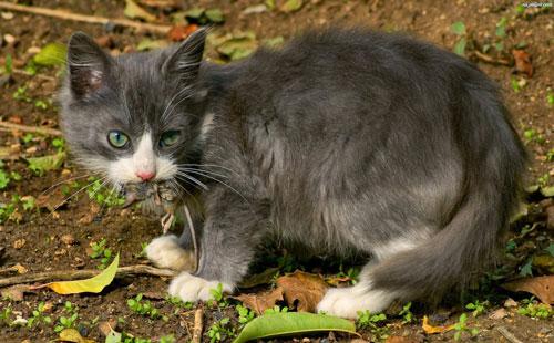 hunting-cat2