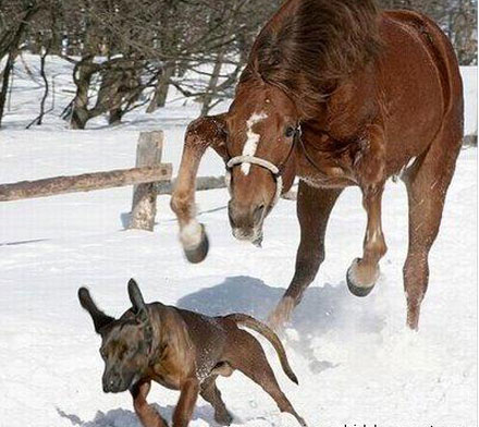 Unlikely Friends