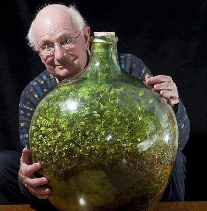 A garden in a bottle, planted by David Latimer in 1960