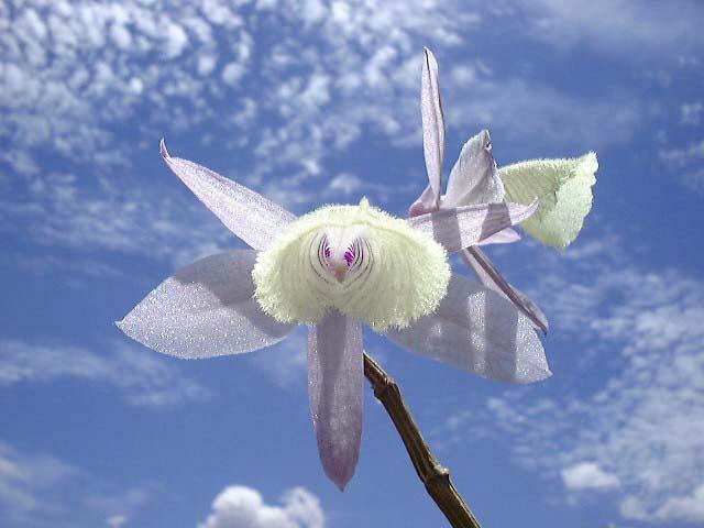 http://digitalphotopix.com/wp-content/uploads/2014/01/Luscious-Lotus.jpg
