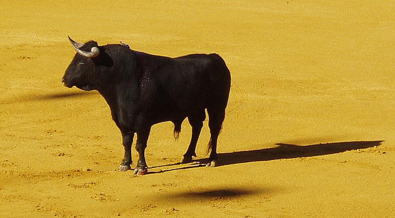 bull- spain